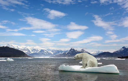 Not only will melting glaciers harm polar bears, but they could cause millions of environmental refugees