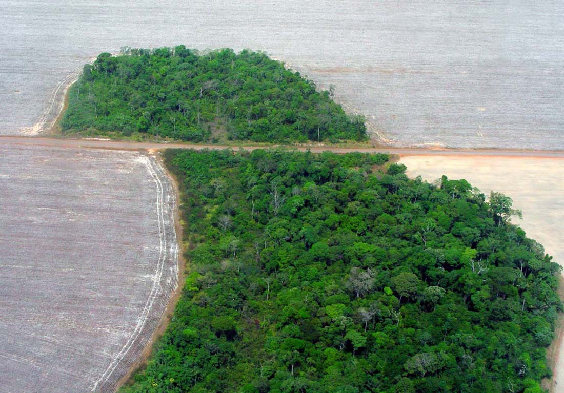 Deforestation in the Mato Grosso state of Brazil in 2007