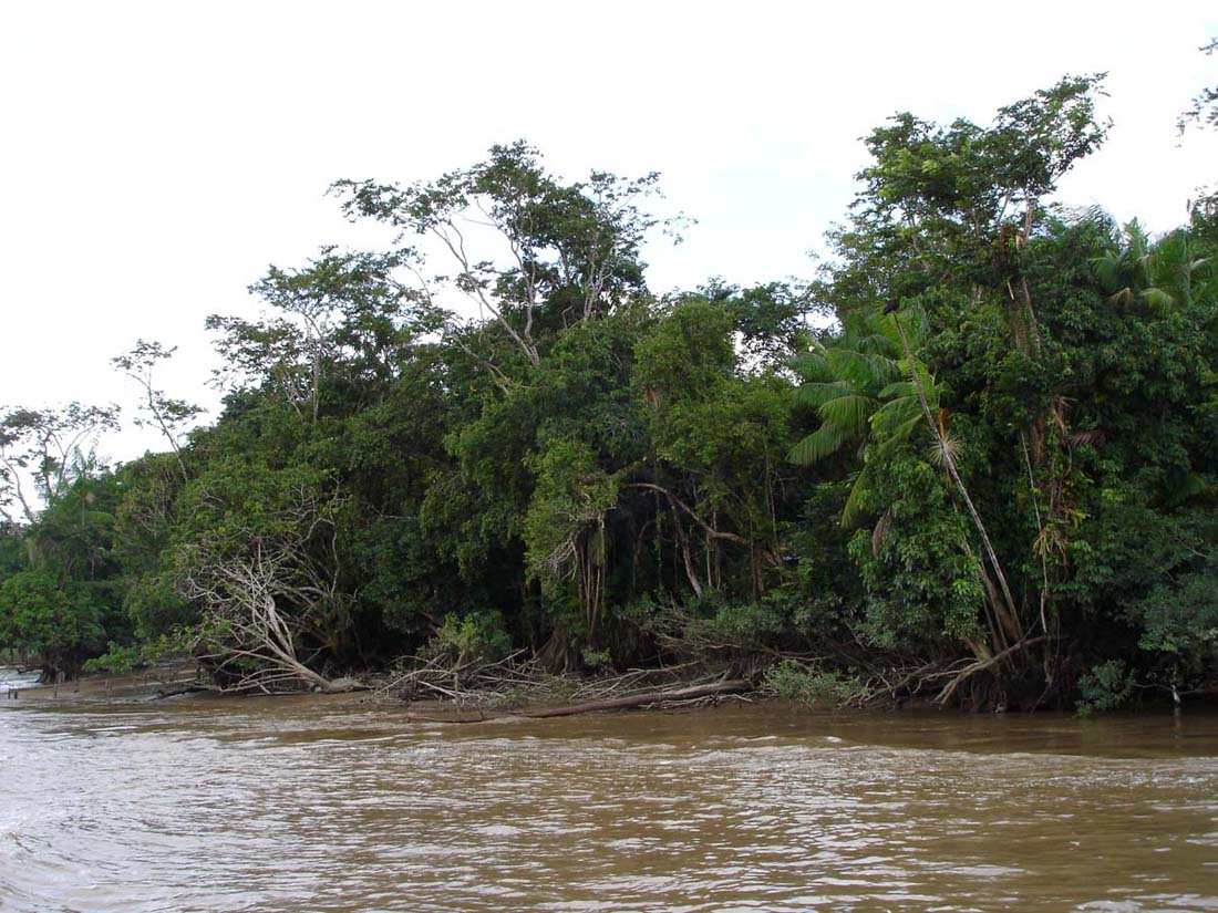 The Amazon River is causing more floods than usual