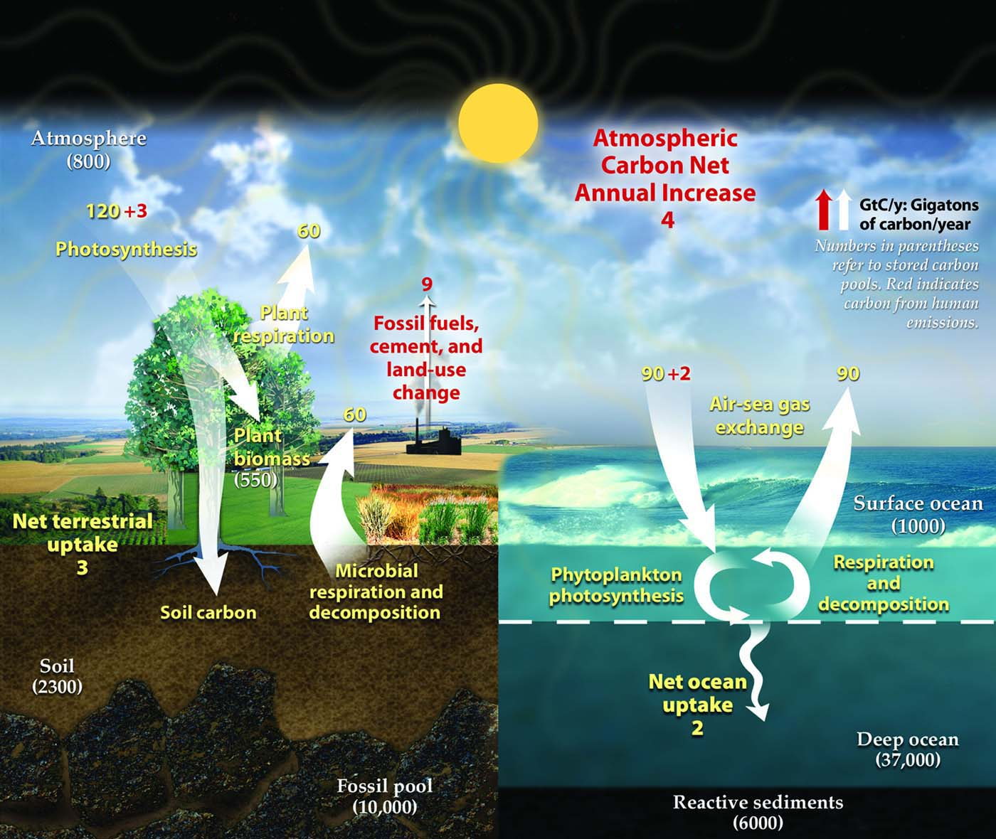 Greenhouse gases diagram of the earths annual carbon cycle pooptronica Choice Image