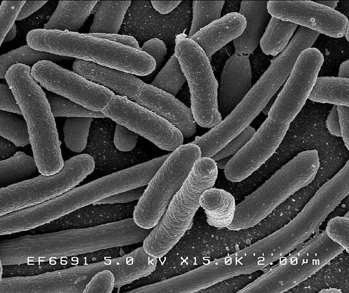 Salmonella is a type of bacteria that infects over 140,000 Americans each year