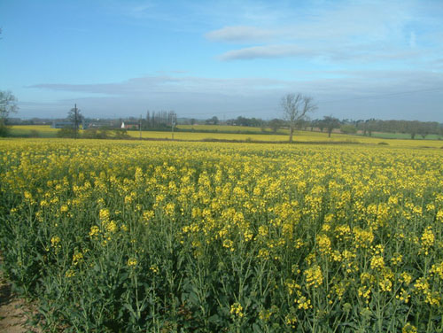 Biofuel will help reduce greenhouse gas emissions