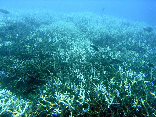 Ocean acidification is responsible for coral bleaching which will have a significant impact on all surrounding marine life