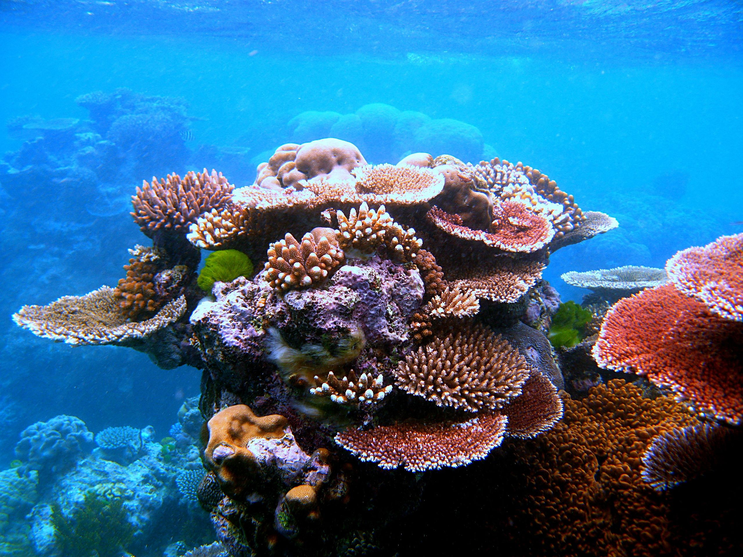 Colourful Corals