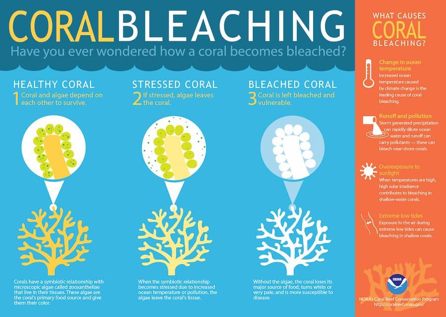 Coral Bleaching Info
