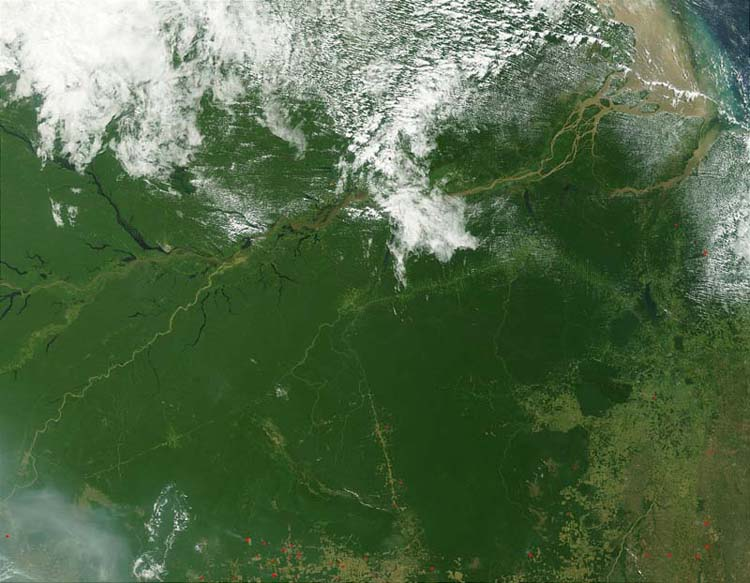 The deforestation in the Amazon Rainforest can be seen from satellites