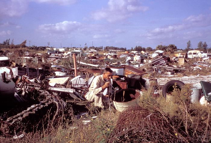 The 1965 Aedes Aegypti eradication program in Miami, Florida