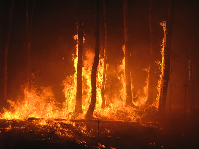how to prevent forest fires climate change