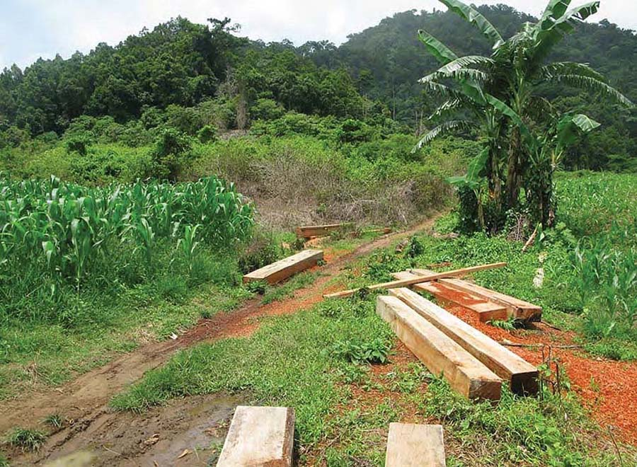 There is illegal logging in the Amazon rainforest and in other regions of the world