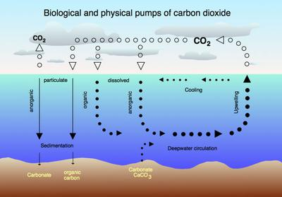 Natural Carbon Sink