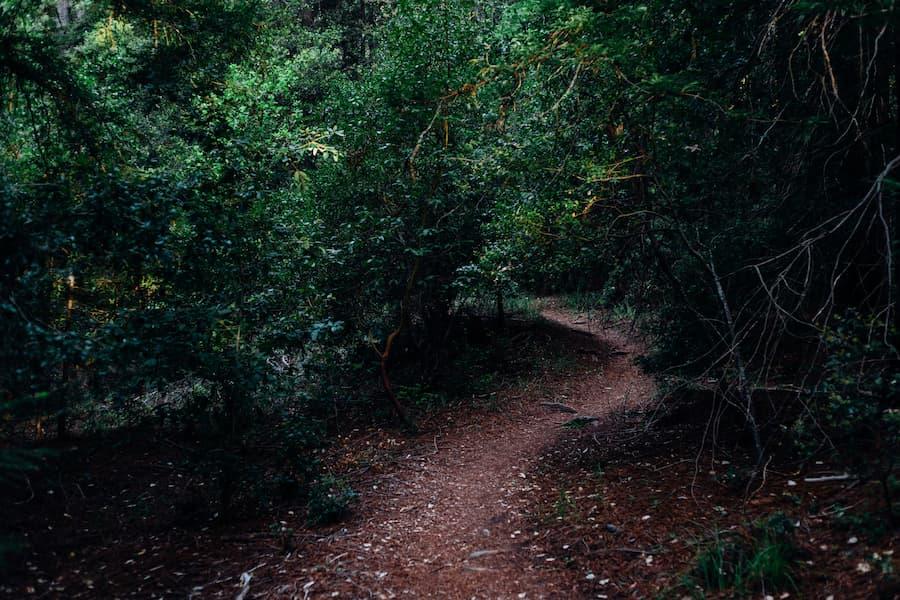 Path between plants