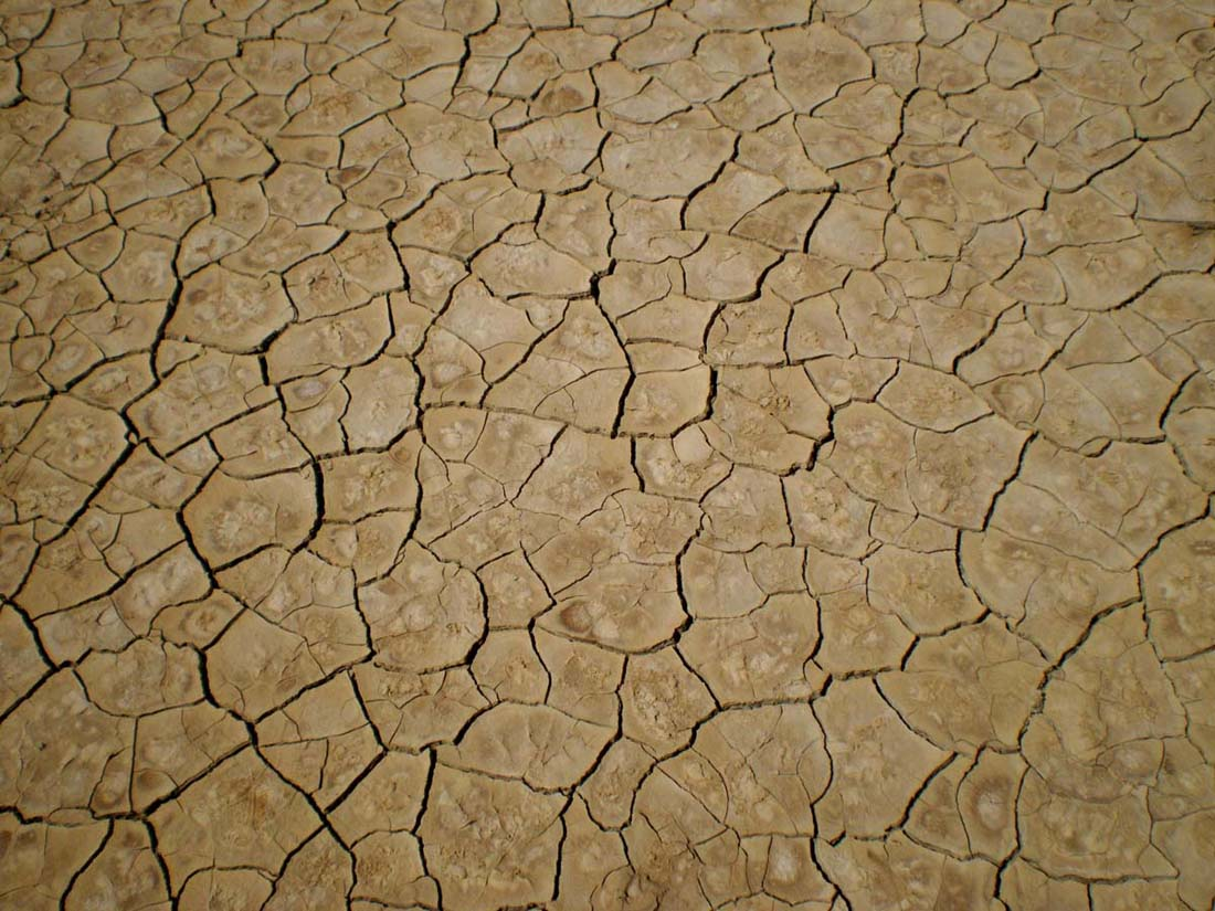 Droughts will lead to a rise in salmonella cases as they will force farmers and companies to use untreated water for irrigating their products