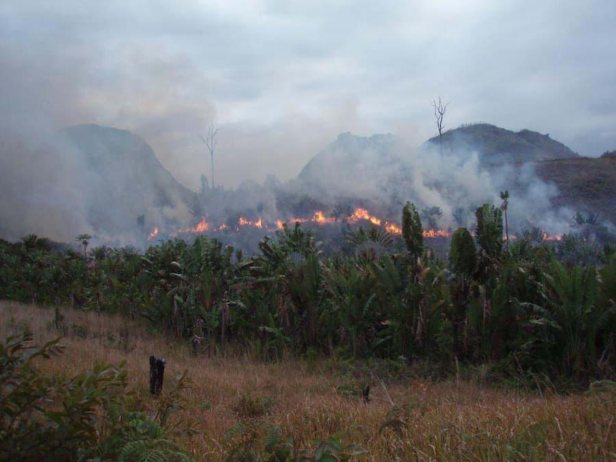 Illegal slash and burn practice in Madagascar