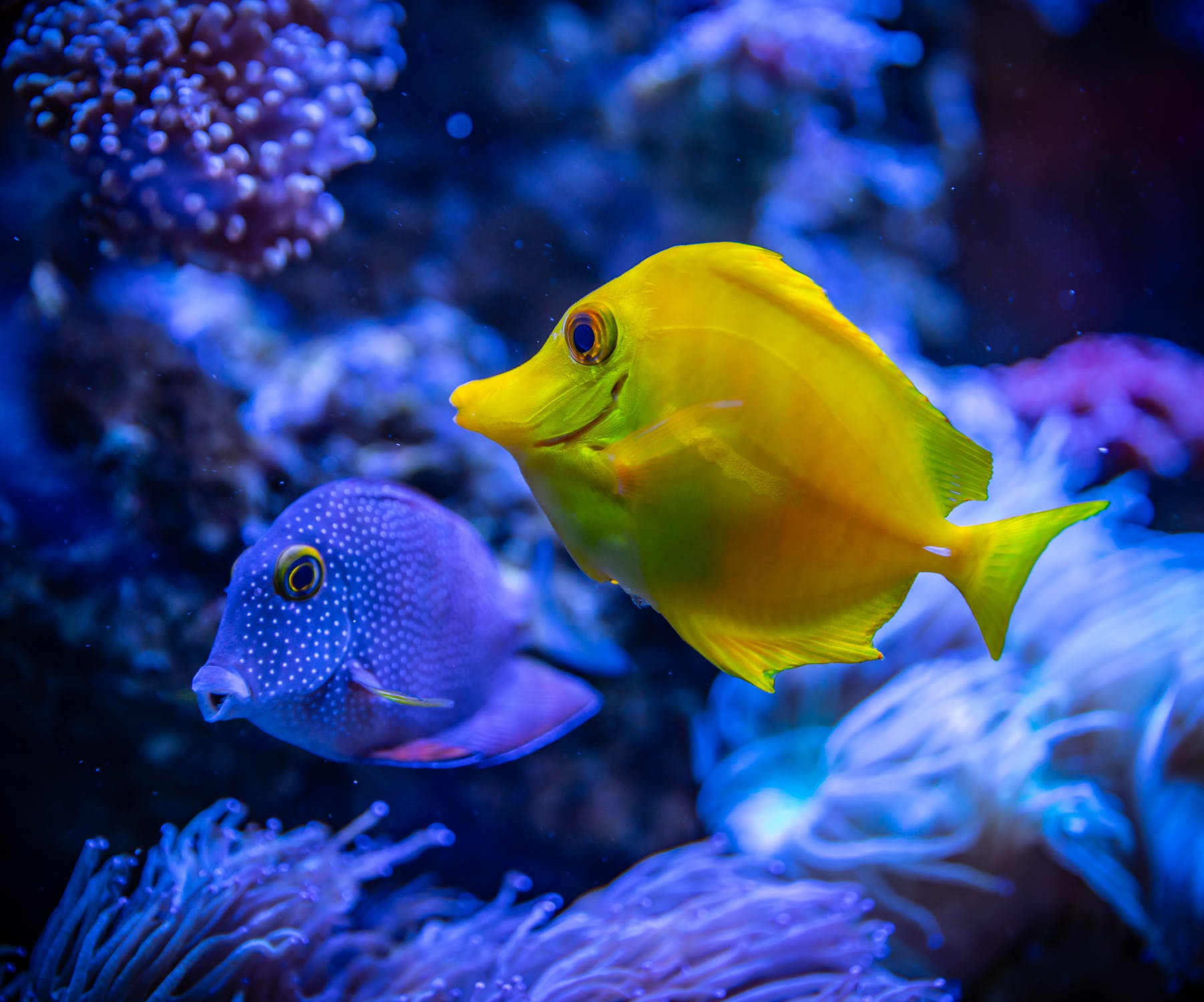 Two Fishes Near Coral Reef