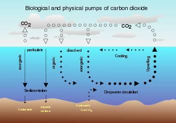 Air Sea Cycle