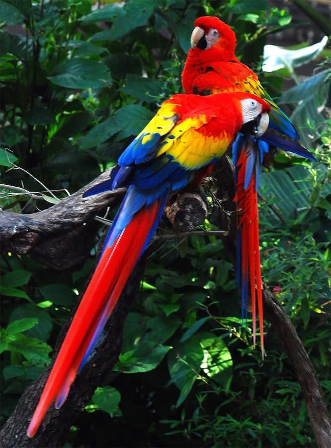The Amazon rainforest has a great biodiversity