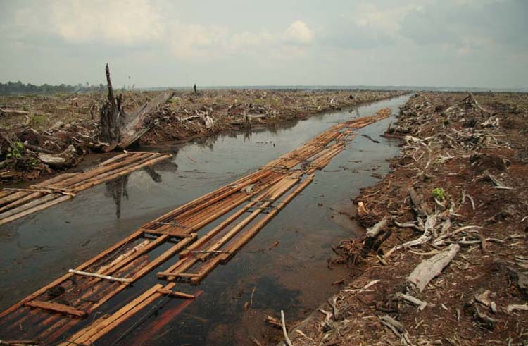 Deforestation for oil palm plantation in Indonesia