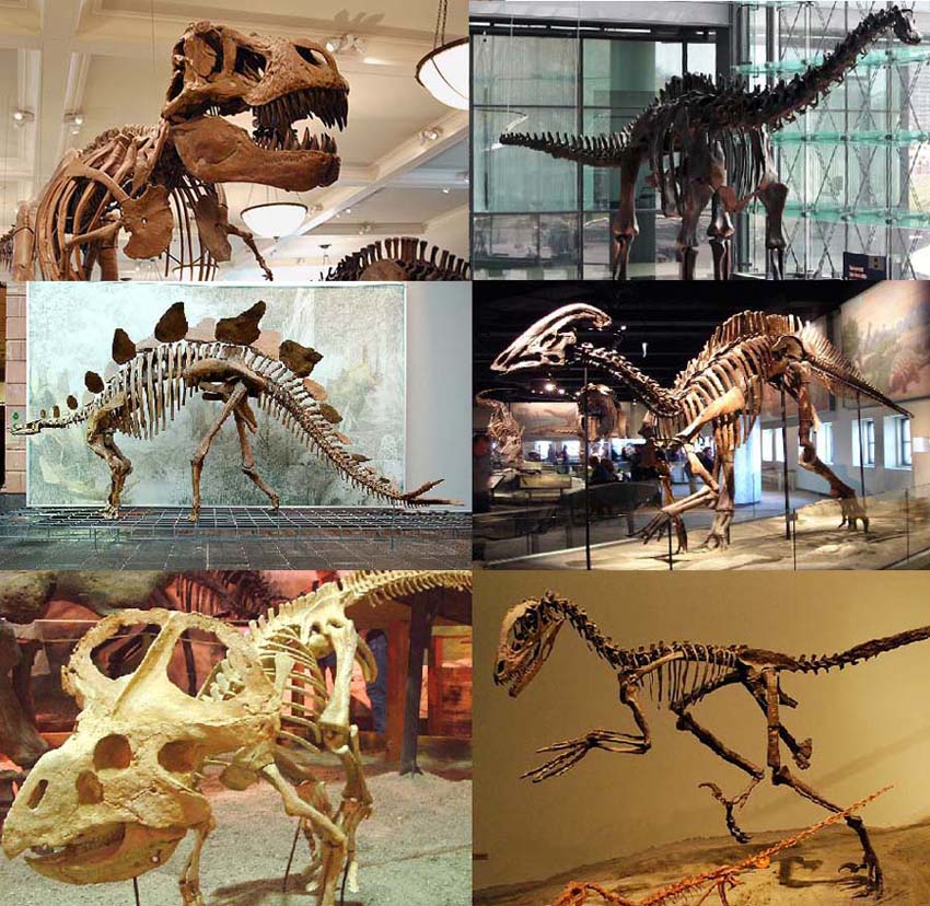 Dinosaurs are the most famous extinct group of animals