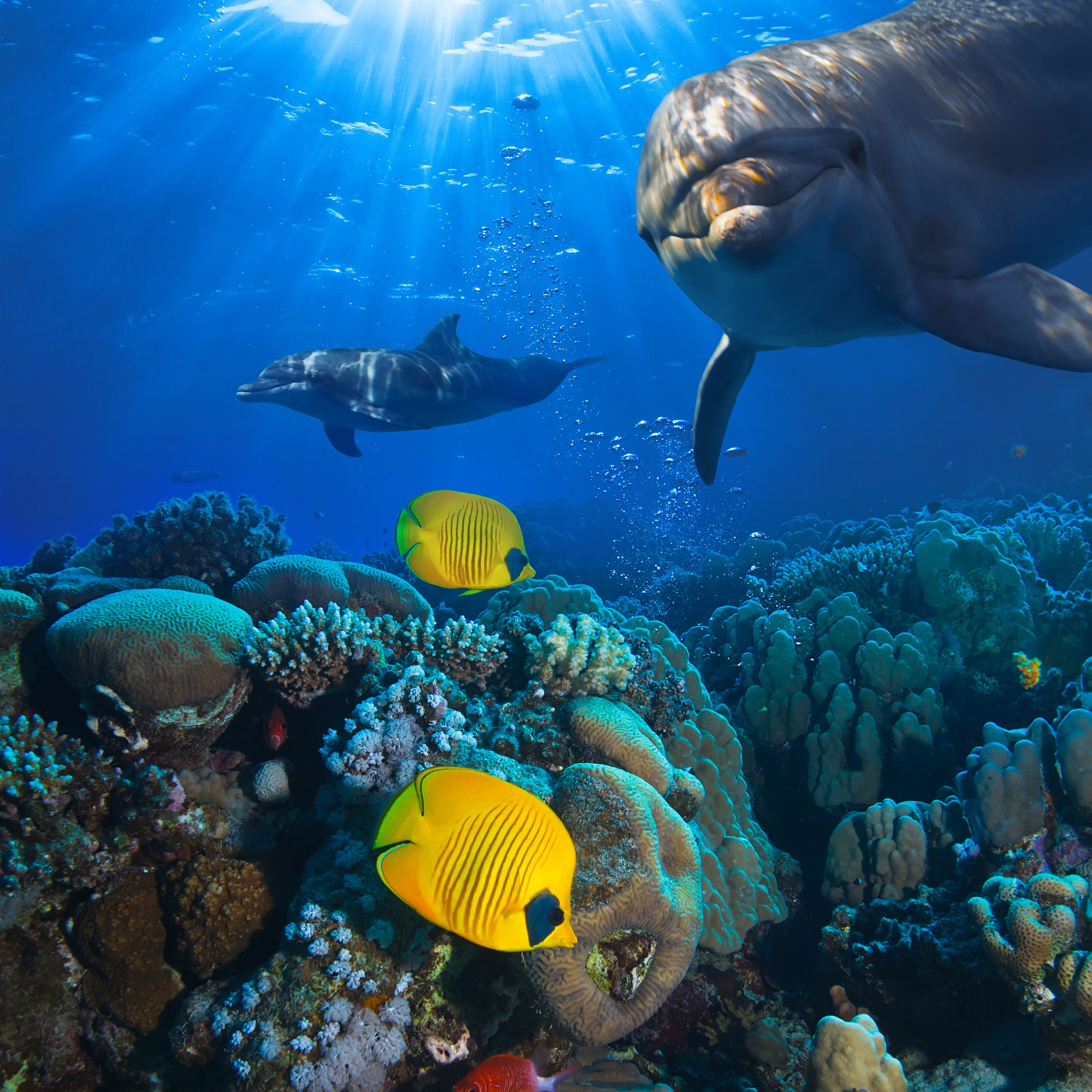 Dolphins and corals