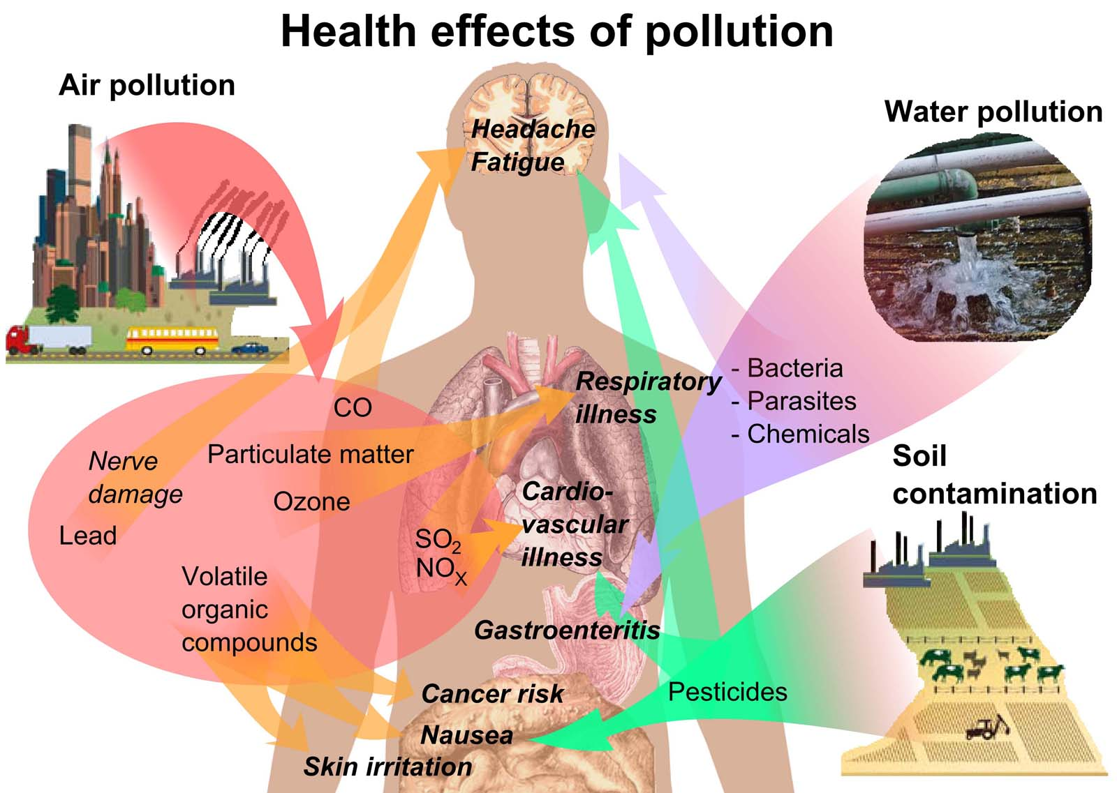 There are many different health effects on humans from pollution