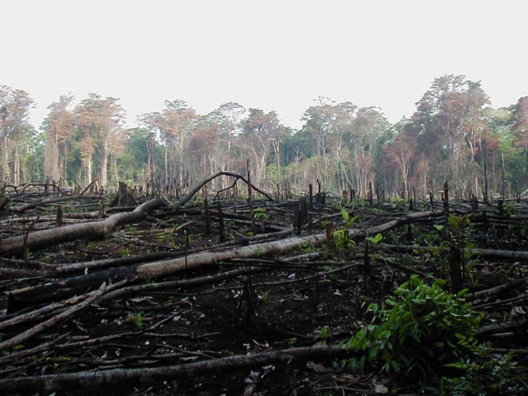 Jungles and forests often get burned for agriculture