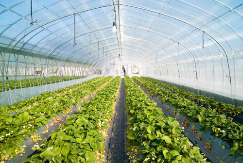 A greenhouse is a building in which plants are grown