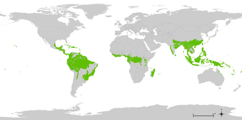 World distribution of tropical rainforests