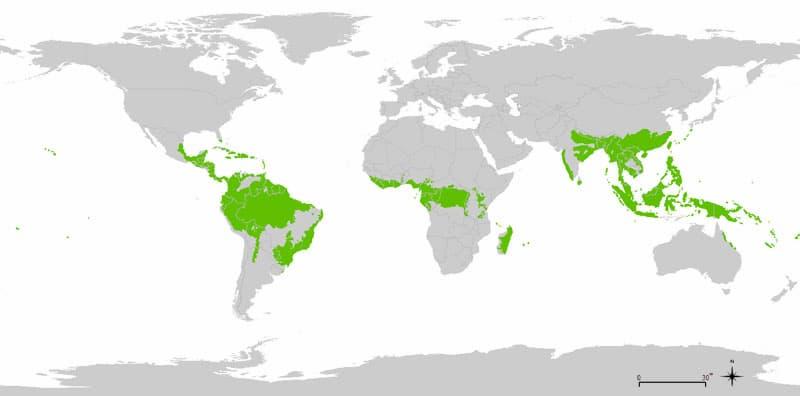 World distribution of tropical rainforests