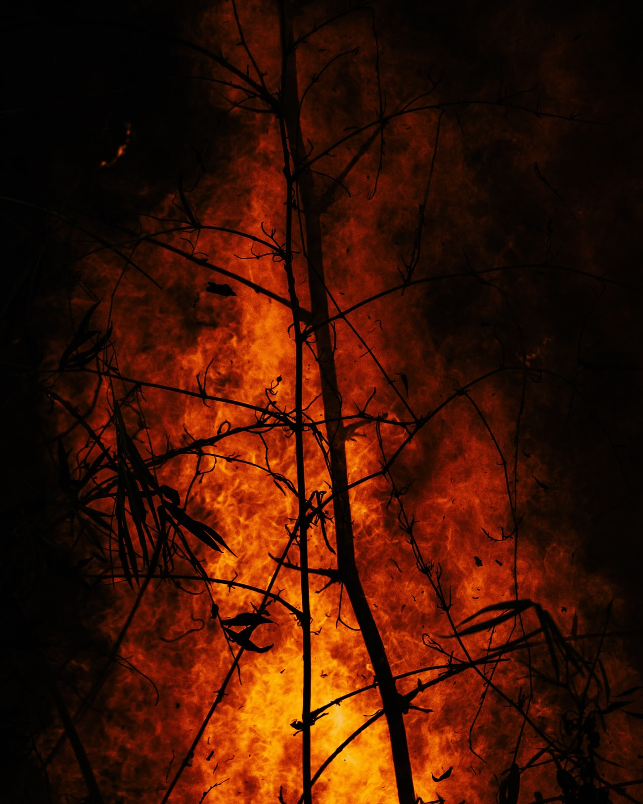 Wildfire Picture